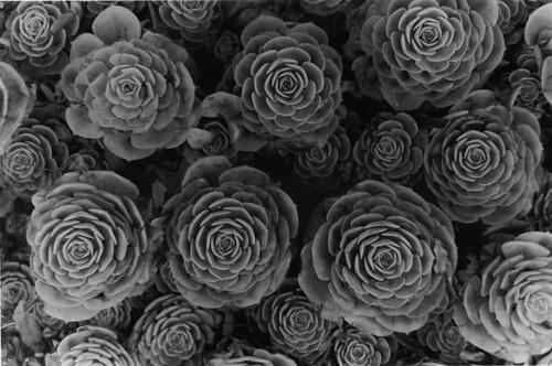 blackandwhite bw film print blackwhite 3d pattern... (Photo: kellinahandbasket on Flickr)