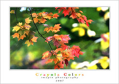 C r a y o l a    (6 4) (Imapix) Tags: autumn canada art fall nature colors leaves automne canon photography photo leaf foto photographie image quebec fallcolors foliage qubec lifesaver crayola imapix colorleaves supershot gaetanbourque colourartaward lifesavecolorsr imapixphotography gatanbourquephotography