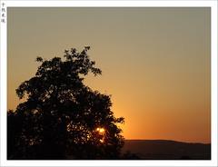 (Oliver Fist) Tags: trees sunset sky orange sun tree nature garden ilovenature daylight searchthebest poland krakow pictureaday krakoff anawesomeshot diamondclassphotographer flickrdiamond monthlythemegroupapr07 kaszow kasb