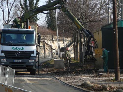 Baumfällarbeiten an der Bautzner Straße (15)