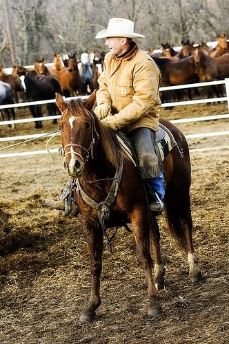 gathering mares 268