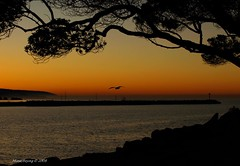 Newport Sunrise (Mine Beyaz) Tags: ocean california sea mist fog sunrise newportbeach sis deniz soe pus supershot 10faves okyanus mywinners superbmasterpiece diamondclassphotographer betterthangood theperfectphotographer gundogumu minebeyaz