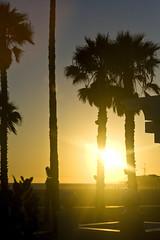 Santa Monica Pier 15