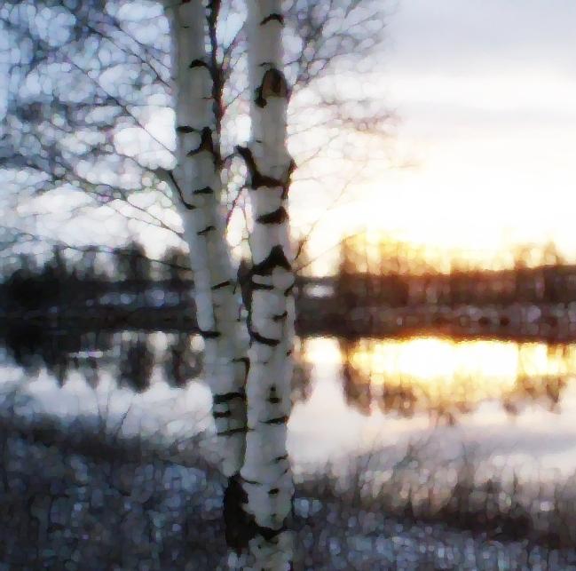 birches, river, mirror, sunset, blue, violet, winter, december