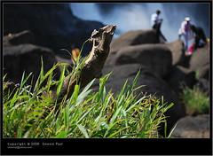 falls (Smevin Paul) Tags: india paul photography nikon photos kerala contact 1855 thrissur trichur kuriachira smevin smevinpaul d40x trisoor malayalikkoottam smevins thrisookaran kfm3