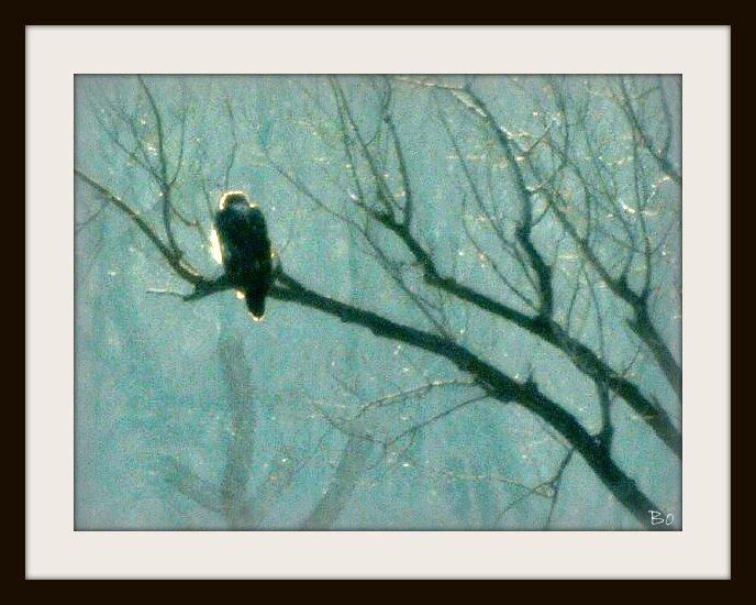 Bald Eagle in River Steam