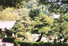Nan Lian Garden (sftrajan) Tags: park garden hongkong chinese jardin bonsai newkowloon filmcamera chinesegarden  2008 garten  nikonem penjing diamondhill  jardinchinois    nanliangarden miniaturetrees chinesischegarten tangdynastystyle       gartenkunstinchina vntrunghoa