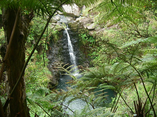 A small waterfall on the lush,