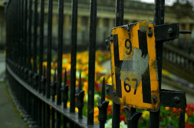 Princes Street Daffodils