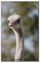 Hand Puppet (edl1954) Tags: portrait nature ostrich lincolnparkzoo wildanimals incrediblenature canon40d