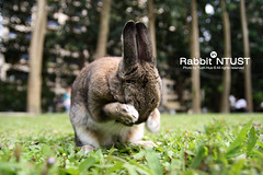 Rabbit : Don't stare at me !!! I'm very shy :P (*Yueh-Hua 2013) Tags: cute rabbit bunny green grass animal canon eos shy lovely  q  tamron coy    ntust  bashful 30d   a16 canoneos30d  horizontalphotograph   tamronspaf1750mmf28xrdiii  nationaltaiwanuniversityofscienceandtechnology   2008april