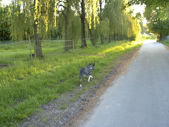 Spurt (tolltroll11) Tags: hund bardino