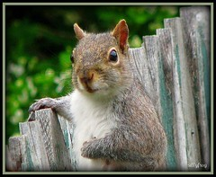 Napoleon the Ham (sillyfrog :-)) Tags: nature pose rodent spring squirrel sensational picturesque youlookinatme diamondheart platinumphoto flickrenvy theperfectphotographer platinumphotographs photosthatrock worldnaturewildlifecloseup earthanditsincredibleanimals planetaterraeseusanimaisincrveis throughyoureyestoours photographersgonewild diamondheartgallery