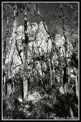 rochers de l'impératrice (pamélaroué) Tags: plougastel rochers escalade bois