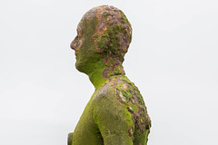 In Profile (cathbooton) Tags: statue antonygormley anotherplace castiron lifesize beach crosby uk weathered profile canoneos canonusers canon6d sculpture modern figure artist