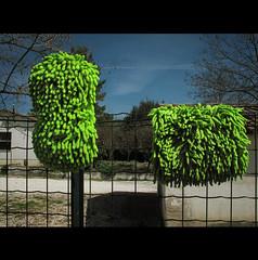 A CLEAN ATTITUDE (Elena Fedeli) Tags: italy rural fence italia farm cleaning towels marche jesi rete pulizie casettw littlehoses spongesspugneverdeacidoacidgreenblueskycieloblu