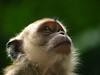 Cynomolgus Monkey (6th anniversary Getty Images edition) (Erik K Veland) Tags: animals monkey eyes expression malaysia ape personalfavorite kualalumpur favourite primate batucaves ferie animalia mammalia dyr primates macaque macacafascicularis macaca bestphoto almosthuman cotcpersonalfavorite cercopithecidae erikkveland