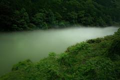 Fog Creek (HarQ Photography) Tags: mist green japan fog river digitalcameraclub saariysqualitypictures