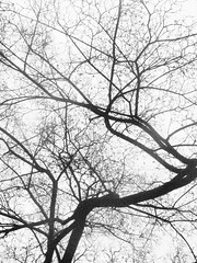 The three is bending for me :-) (NINA CECILIE Here I am :-)) Tags: autumn white black contrast three bending awesometrees