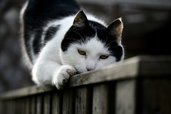 Nisse II (I LIKE IT SIMPLE) Tags: cats macro animal animals cat canon eos 350d sweden like it sverige usm 60mm simple efs f28 clawing i cc100 impressedbeauty betterthangood ilikeitsimple