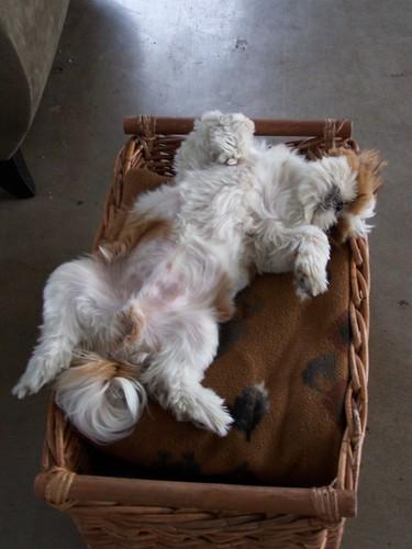 wonton in a basket