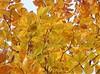 Autumnal wallpaper (Jean-christophe 94) Tags: autumn wallpaper orange tree leaves yellow jaune automne arbre feuilles globalvillage branche globalcity invitedphotosonly gvadminshalloffame itsabeautifulgv excapture jc94 jeanchristophe94
