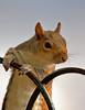 Whiskers (graspnext) Tags: aplusphoto superhearts photofaceoffwinner photofaceoffplatinum pfogold