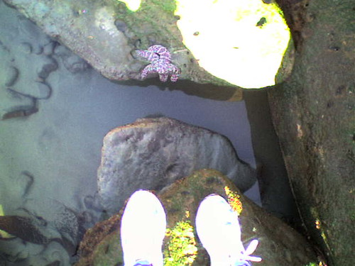 My feet and a friendly starfish (and 21 more photos)