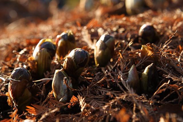 早春の芽吹き