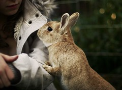 (parade in the sky) Tags: pet cute rabbit bunny furry backyard sweet bokeh sister candid elmo cuddly isabel curious