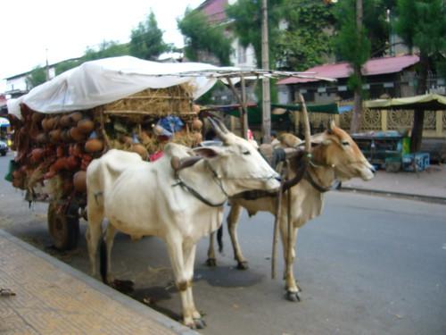 Ox Cart Phom Penh