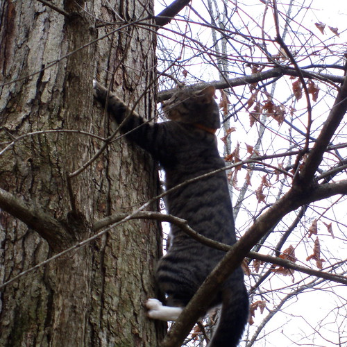 intrepid tree climber