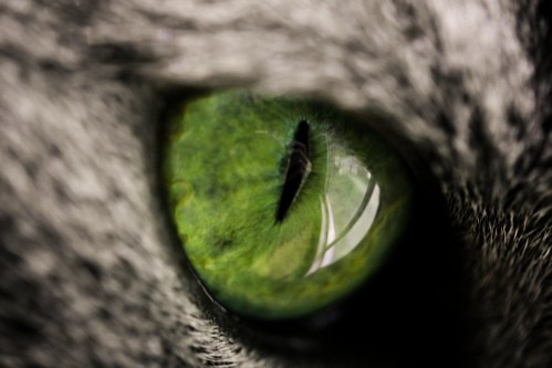 reptile eye?