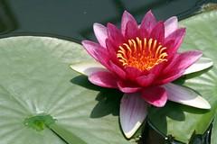20080327_0973 c  Queen Sirikit Botanical Gardens