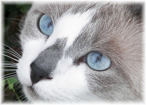 Black She Cat With Blue Gray Splotches And Amber Eyes