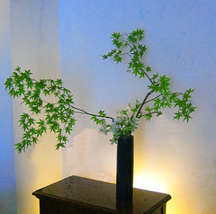 Ikebana Sogetsu (realizzato da Luca Ramacciotti) (LucaRam) Tags: italy sculpture stilllife flower art nature japan season maple arte decorative interior ikebana natura zen essence meditation organic fiori minimalism minimalismo alstroemeria arrangement giappone interni stagioni decorazioni acero scultura kado organico scenografia  scenography sogetsu kenzan meditazione  japaneseflowerarrangement essenziale flickrsbest passionphotography golddragon mywinners abigfave anawesomeshot kad life~asiseeit lucaramacciotti ikebanado multimegashot lucaram wonderfulworldofflowers wwwikebanadocom httpwwwflickrcomgroupssogetsuikebana awesomeblossoms canoneos1000d