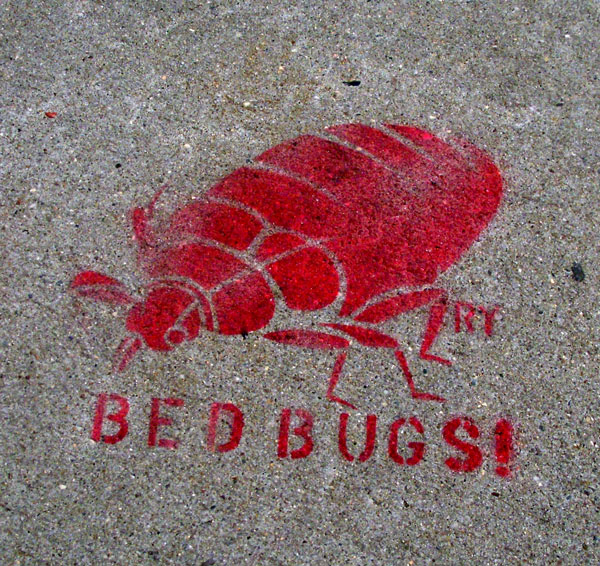 Bedbug on the Sidewalk