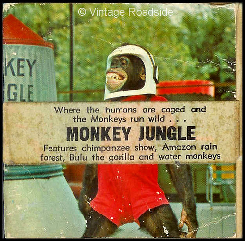 1960s Monkey Jungle film