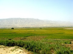 Rice Fields near Puli Khumri (From Afghanistan With Love) Tags: travel afghanistan digital canon photography rebel kiss northern salang zeerak safrang hamesha javaid samangan aybak