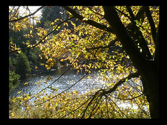 Alder with a View (frazz46) Tags: autumn tree fall leaves sunshine pond naturesfinest blueribbonwinner smalllake imagepoetry aldertree abigfave anawesomeshot pdpnw superbmasterpiece diamondclassphotographer theperfectphotographer