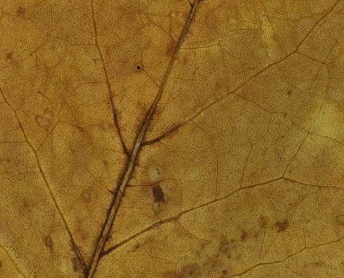 leaf-detail