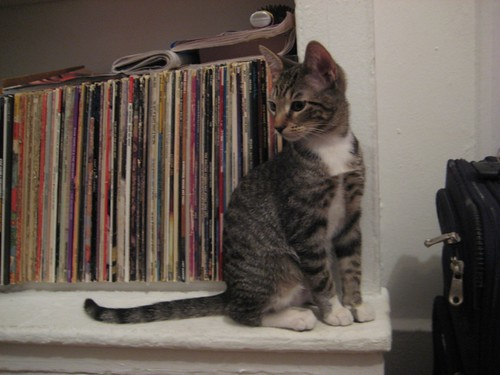 buster still likes LPs