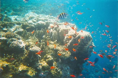 Ras Mohammed Underwater