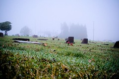 Cold And Lonely - the Lone Oak Cemetery on a foggy day in Stayton Oregon