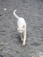 + um gato branco