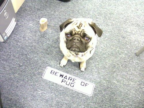 Beware of Pug