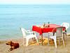 a good breakfast (AraiGodai) Tags: dog beach breakfast interesting explore blueribbonwinner araigordai abigfave seafalcon raigordai araigodai
