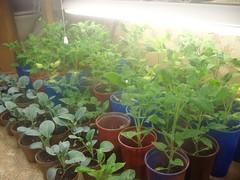 garden 5 weeks