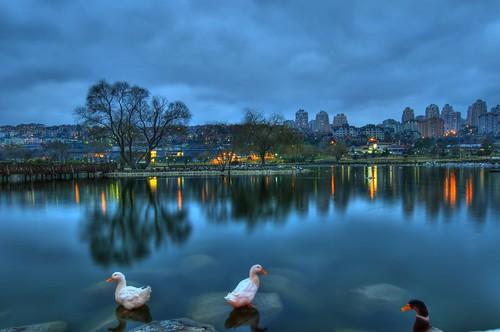 On the Blue Pond