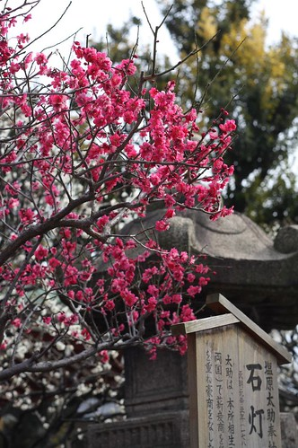 red plum flowers